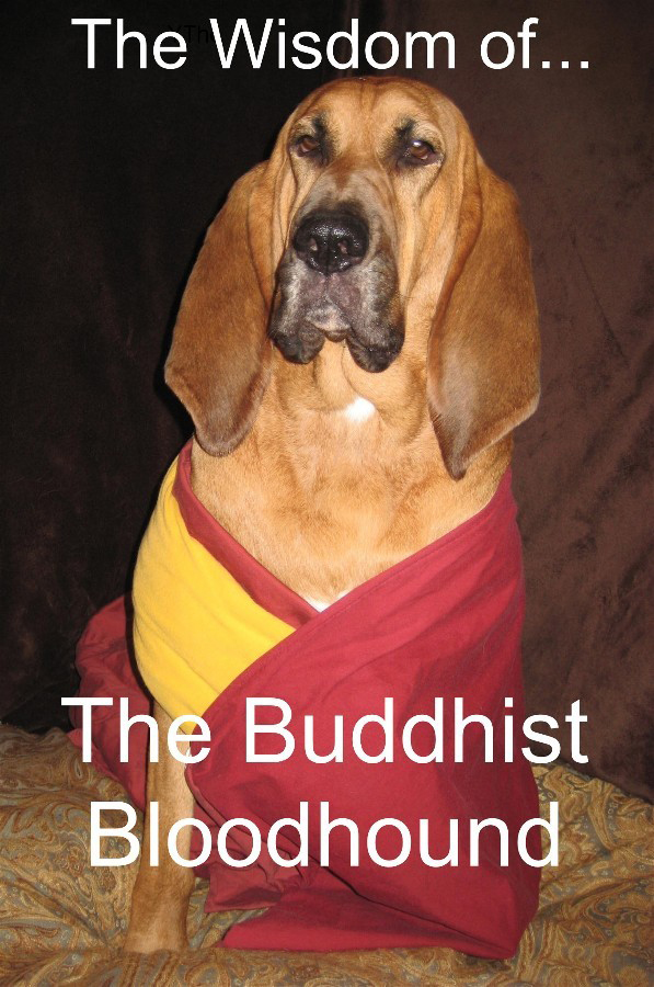 The Wisdom of The Buddhist Bloodhound by Frankie Rose with Wahula Gonzo and Jamie Brazil translating